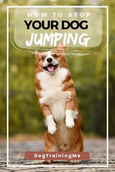 How to stop your dog jumping. Learn the 4 most important things you need to know to stop your dog from jumping and the 2 biggest mistakes people make. Find out now by reading our article! Pet Dogs, Pets, The Perfect Dog, Dog Training Tips, Dog Care, Dog Owners, Funny Dogs, Mistakes, Puppies