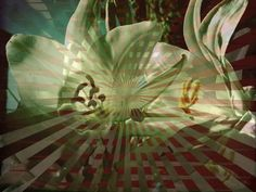 Lily's iPhoneArt: created with Rollage iPhone app!