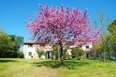 Villa panoramica Fano