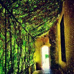 ¿Te apetece descansar de tu paseo por Sevilla en un lugar de sombra como este?