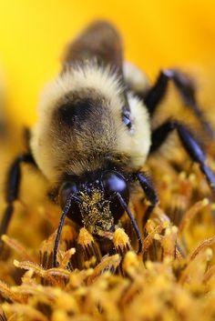 Pollen Face!