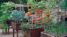 Alimentación, salud, energía y vida natural   Vida Plena, sostenible y natural