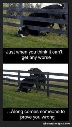 HAHAHA!! TOO bad I personally know heifers like this