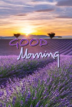 Good Morning Sunday Images, Good Morning Happy Saturday, Good Morning Beautiful Pictures, Happy Morning Quotes, Good Morning Inspiration, Morning Memes, Good Morning Picture, Good Morning Messages, Good Morning Good Night