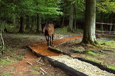 Je abwechslungsreicher ein Trail angelegt ist, umso besser für die Pferde. Enge Pfade schaffen zusätzliche Bewegungsanreize.