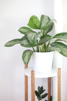Make this Mid Century inspired plant stand to show off the houseplants