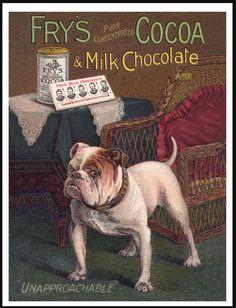 ENGLISH BULLDOG ON FRYS COCAO ADVERT LOVELY VINTAGE STYLE DOG PRINT POSTER