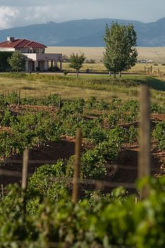 Sonoita Vineyards - beautiful location to spend the day tasting great wines