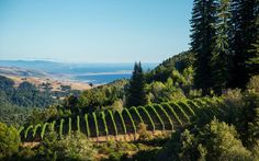 Wineries and activities