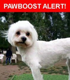 Please spread the word! Missy was last seen in Los Angeles, CA 91406.    Nearest Address: Near Victory Blvd & white oak Ave