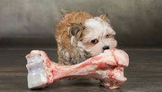 reasons not to feed your dog raw