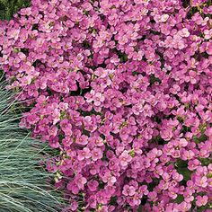 best ground cover for slopes | ... border. Excellent ground cover for dry areas, slopes or sunny areas