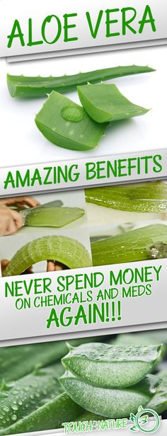 Amazing Benefits Of Aloe Vera. Never Spend Money On Chemicals And Meds Again! – Touch Of The Nature