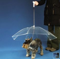 Must get this.....The Dog-brella.  For those pups who dislike the rain.  For doting guardians.