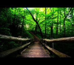 Seven Bridges Trail. Grant Park. South Milwaukee, WI. Keith and I hiked this trail almost weekly for 5 yrs! Loved it!