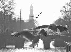 #Eenhoornsluis foto: David de Leeuw november 2015