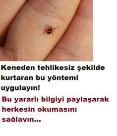 How can you get rid of the tick without danger - # dry .- Tehlikesiz şekilde keneden nasıl kurtulursun – How to get rid of the tick without danger – from you # Figure - Infused Water Recipes, Yoga, Alternative Medicine, How To Get Rid, Organic Skin Care, Good To Know, Body Care, Natural Remedies, Flu Remedies
