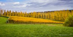 A great time in the Yarra Valley during Autumn