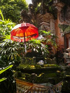 Love the contrast between the lush jungle and the bright red umbrella. Umbrella Lights, Red Umbrella, Giant Steps, Outdoor Living Rooms, Skull Island, Parasols, Lombok, Courtyards, Wanderlust Travel