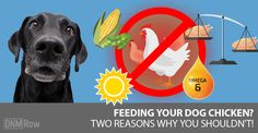 #Chicken is cheap … but if you're not careful, it can be costly to your #dog's #health. Learn how to make chicken safer ... via: #DogsNaturally #rawfeeding #natural #doghealth