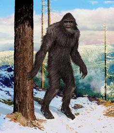 These reports are mainly based on video evidence to support them, this is by no means the most impressive Bigfoot encounters yjat we all know of but cameras were not available. Description from bigfootbuzz.net. I searched for this on bing.com/images