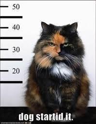 Gansta kitty