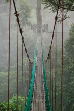 Canopy Walk, Danum Valley, Malaysia. | Most Beautiful Pages