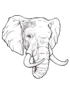 how to draw an elephant head