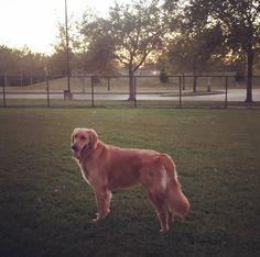 st.charles dog parks