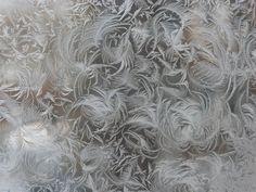 Frost on Glass: Ice Flower Art ~ Kuriositas