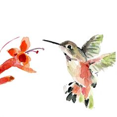Hummingbird, Print of original watercolor painting, bird art, humming bird and flower, mothers day, nursery decor, bird lover, cottage chic
