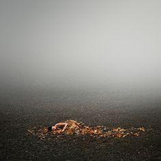 Fall by Michal Zahornacky