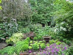 Garden July 21 2011 046