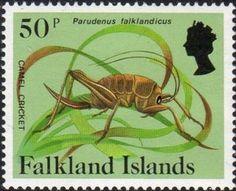Camel Cricket (Parudenus falklandicus)