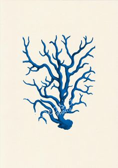 Blue coral  sea life print  free shipping by seasideprints on Etsy, $12.00