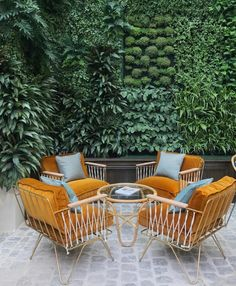 chic mustard outdoor chairs & a living wall!
