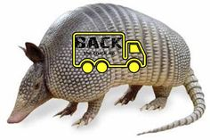 15 Amazing Facts about the Armadillo