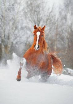 We need to take the baby horse to some snow and take pictures! Beautiful! @Kathy Chan Cassinelli