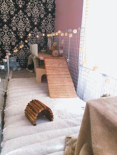 Comfy, cozy, Guinea pig cage