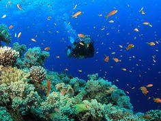 diving phuket - ค้นหาด้วย Google