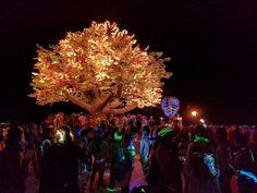 Tree of Tenere / Symmetry Labs
