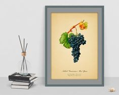 Grape Botanical vintage watercolour picture antique home poster wall geclee print old image wall print living room kitchen picture art Watercolor Pictures, Old Images, Botanical Wall Art, Kitchen Pictures, Living Room Kitchen, Poster Wall, Wall Prints, Watercolour, Faith