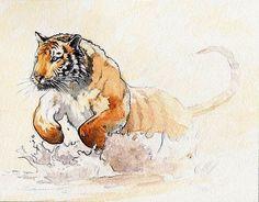 sifflement: a-l'aigua (by Pere Devesa) Tiger Artwork, Cool Artwork, Tiger Painting, Art Watercolor, Watercolor Animals, Animal Sketches, Animal Drawings, Tiger Sketch, Illustrations