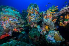 socotra marine | stunningly diverse reef in Socotra. Photo by Tane Sinclair-Taylor
