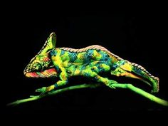 This Chameleon is Actually Two Body Painted Women «TwistedSifter