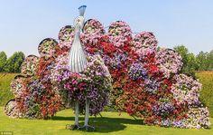 peacock bird made with blooming flower garden