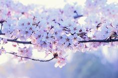 nature, flowers, and pink Bild