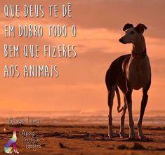 BOM DIA! <3 #petmeupet   #amoanimais   #cachorro   #gato   #amocachorro   #amogato