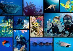 A tenger kincsei :) #TinTatu #Fotokonyv #Tenger #Elmenyek Mosaic, Movies, Movie Posters, Art, Ink, Art Background, Films, Mosaics, Film Poster