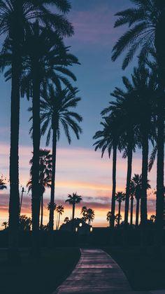 Evening with palm trees. evening with palm trees summer wallpaper phone, iphone wallpaper travel Summer Wallpaper, Tree Wallpaper, Nature Wallpaper, Beach Wallpaper, Beautiful Wallpaper, Print Wallpaper, Phone Backgrounds, Wallpaper Backgrounds, Pretty Pictures